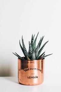 piante camera da letto aloe vera