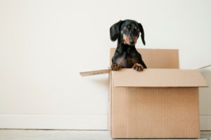 scatola cane trasloco