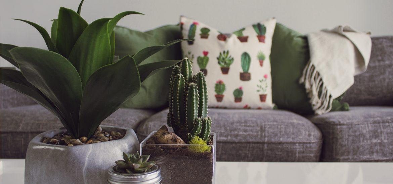 Divano salotto arredamento piante