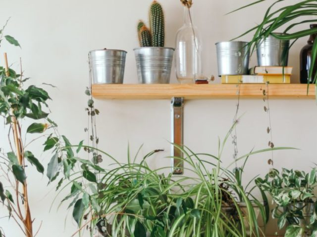 urban jungle wild milano piante vasetti